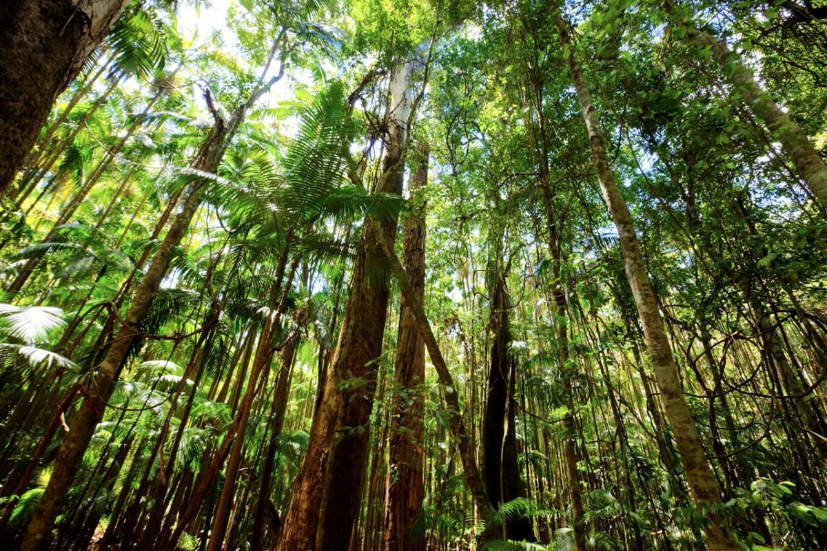 deforestation-bv-iStock_000011173566_Medium-1200x800