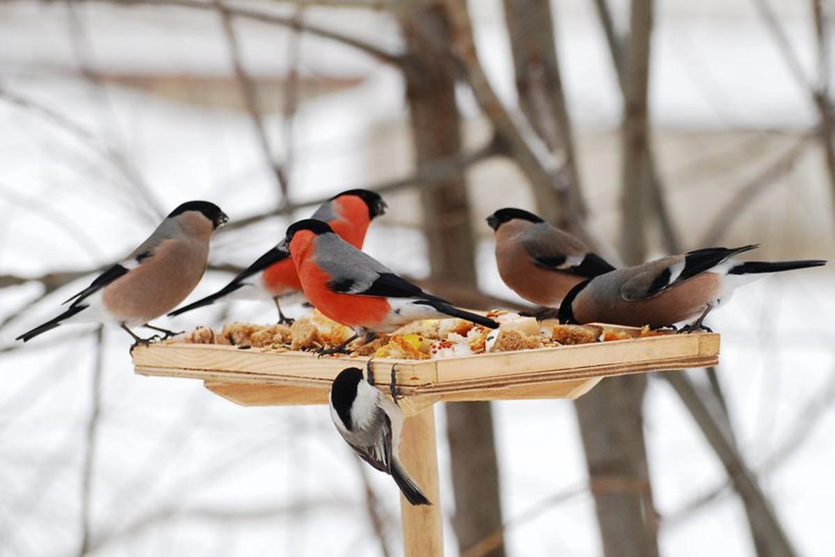 Гугл картинки покормите птиц зимой