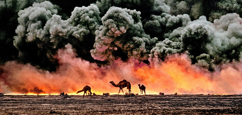 "Ahmadi Oil Fields, Kuwait, 1991, KUWAIT-10001  Camel and Oil Fields  Sandwiched between blackened sand and sky, camels search for untainted shrubs and water in the burning oil fields of southern Kuwait.  Their desperate foraging reflects the environmental plight of a region ravaged by the gulf war. Canby, Thomas Y. (August 1991)  ""The first Gulf War taught us a new lesson in unconventional conflict. Saddam Hussain's army filled the skies of southern Kuwait with black poignant smoke from the burning oil lines.  It was a powerful, debilitating symbol. And there was another.  McCurry, who was covering the war, saw camels running in terror from the fires.  Both images -whether of the fires or of the animals- were powerful representations of the chaos of that time.  Central to McCurry's reputation as a journalist is his discipline to wait, and to search, and then to recognize the most telling image.  The juxtaposition of the fire and smoke and camels running amok creates an icon of that war."" - Phaidon 55  National Geographic, Vol. 180, No. 2, pgs. 2-3, August 1991, The Persian Gulf: After the Storm  Phaidon, 55, Iconic Images, final book_iconic, final print_milan, iconic photographs  As his army retreated from Kuwait, Saddam Hussein ordered the ignition of the oil fields that scatter the country.  The effect was an ecological disaster of unimaginable scale.  These camels are running from the fires.  It is a futile effort: soon they will covered in oil that rains down from the sky.  Steve Mccurry_Book Iconic_Book Untold_book final print_Sao Paulo  final print_MACRO retouched_Sonny Fabbri  MAX PRINT SIZE: 40X60"