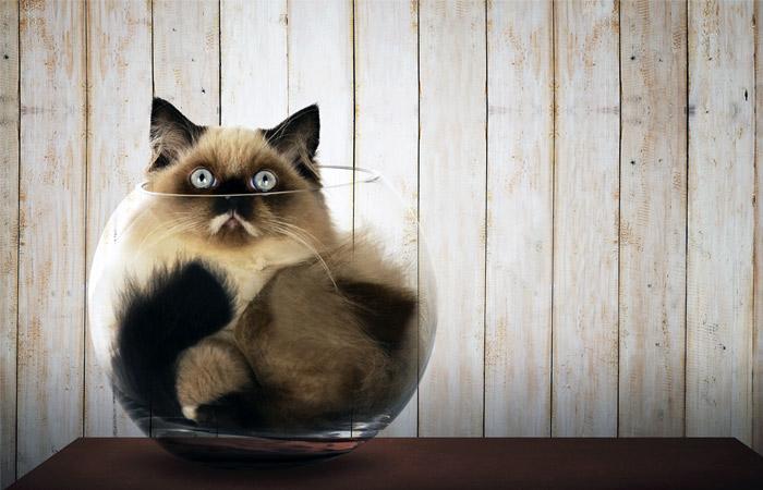 cat700