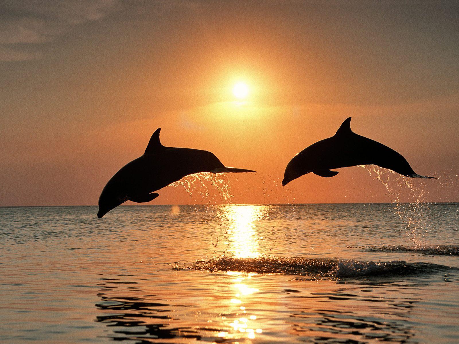 The-best-top-desktop-dolphin-wallpapers-hd-dolphins-wallpaper-2