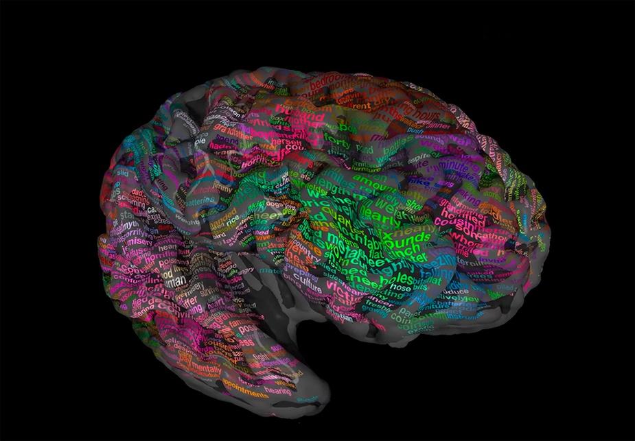 """Картинки по запросу """"3D МРТ мозговая активность"""""""