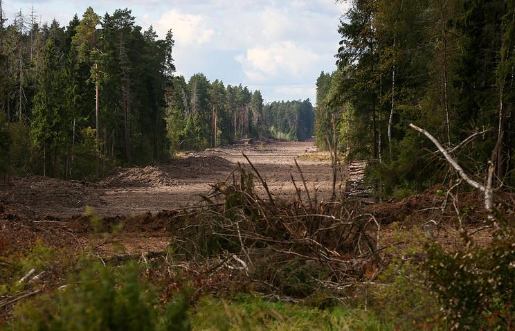 Земли запаса или лесфонда